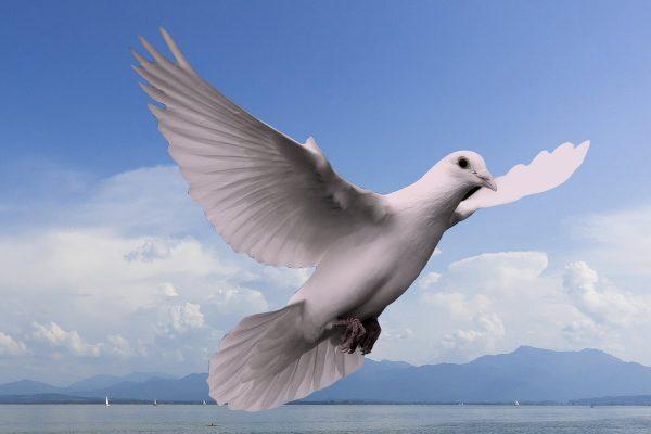 Taube, Pfinsten Heiliger Geist, von neuem geboren