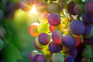 Frucht bringen