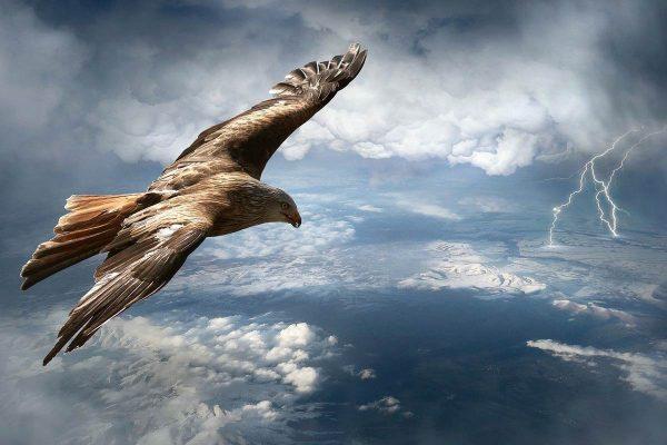 Fliegen wie ein Adler